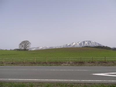 小岩井農場の一本桜(2012.4.29)
