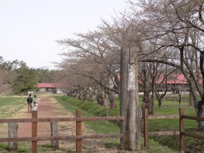 上丸牛舎桜並木(2012.4.29)