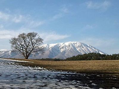 小岩井農場の一本桜(2013.03.24)