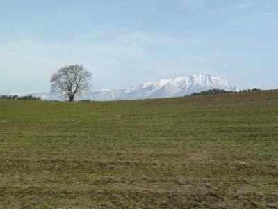 小岩井農場の一本桜(2012.04.15)