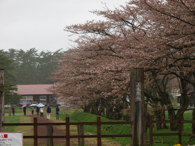 上丸牛舎桜並木(2012.5.2)