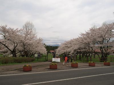上丸牛舎桜並木(2012.5.6)