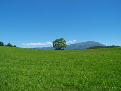 小岩井農場の一本桜(2012.06.25)