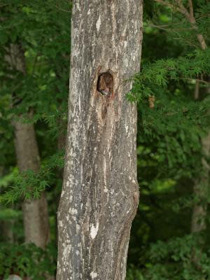 炭火焼バーベキューの森にムササビが出現!
