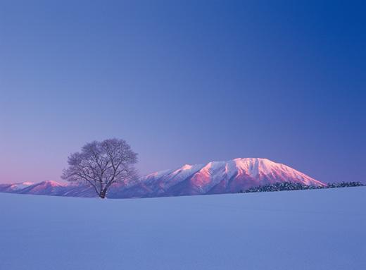 https://www.koiwai.co.jp/makiba/gallery/img/pho05.jpg