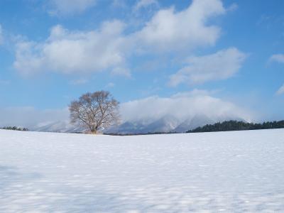 小岩井農場の一本桜(2012.12.12)