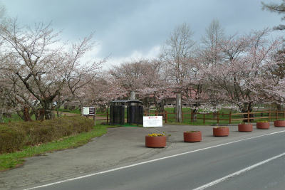 上丸牛舎桜並木(2011.5.8)五分咲き