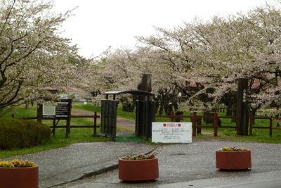 上丸牛舎桜並木(2011.5.13朝)葉桜