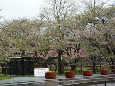 上丸牛舎桜並木(2011.5.14朝)葉桜