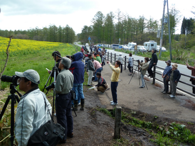 小岩井農場の一本桜前(2011.5.15朝)にぎわってます